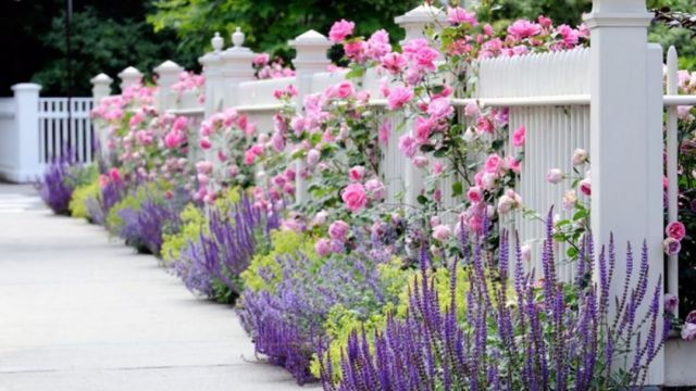 13 Plants as a decorative barrier in the front garden of the house
