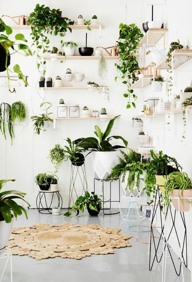 4 Fill Your Entire Room With Plants