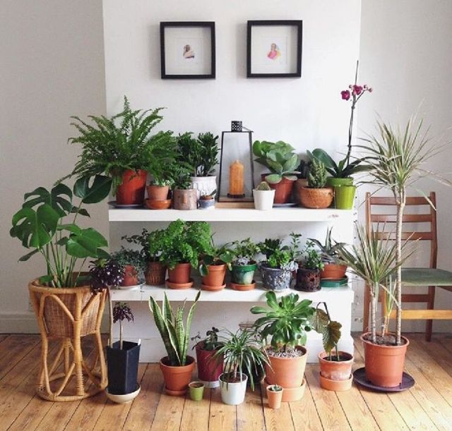 7 Arrange And Arrange Plant Pots In Your Home
