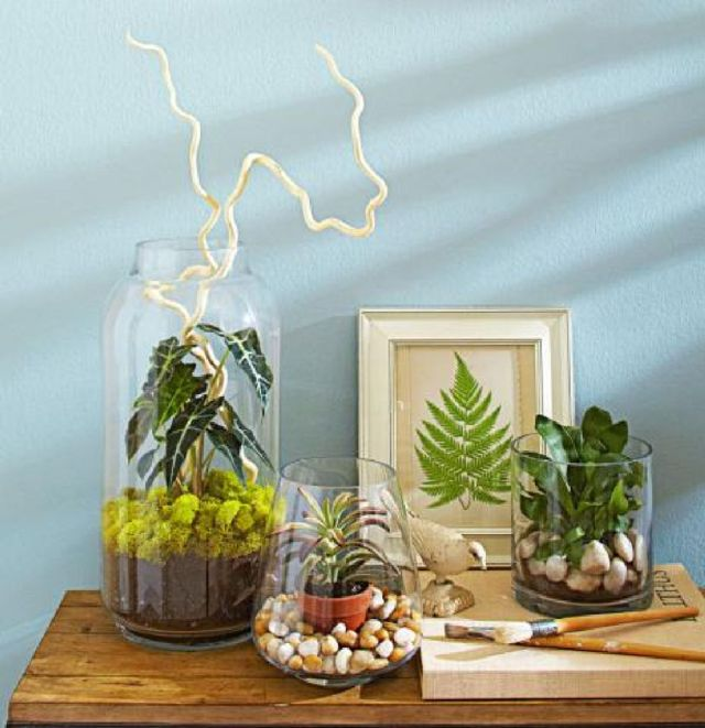 8 Indoor Plants Terrarium