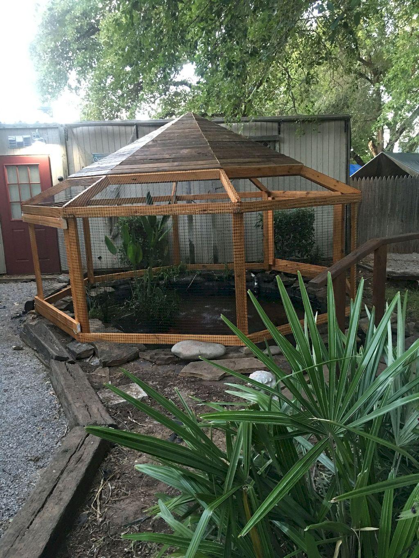 Backyard Pond001