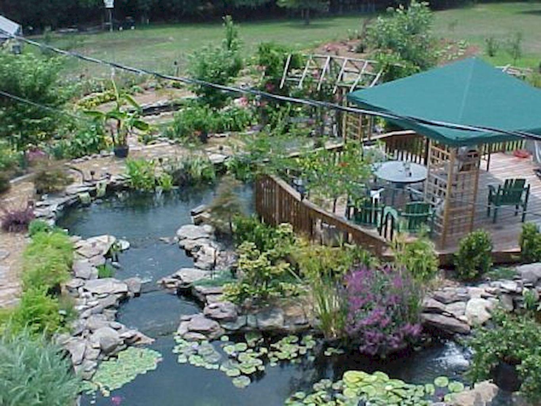 Backyard Pond003