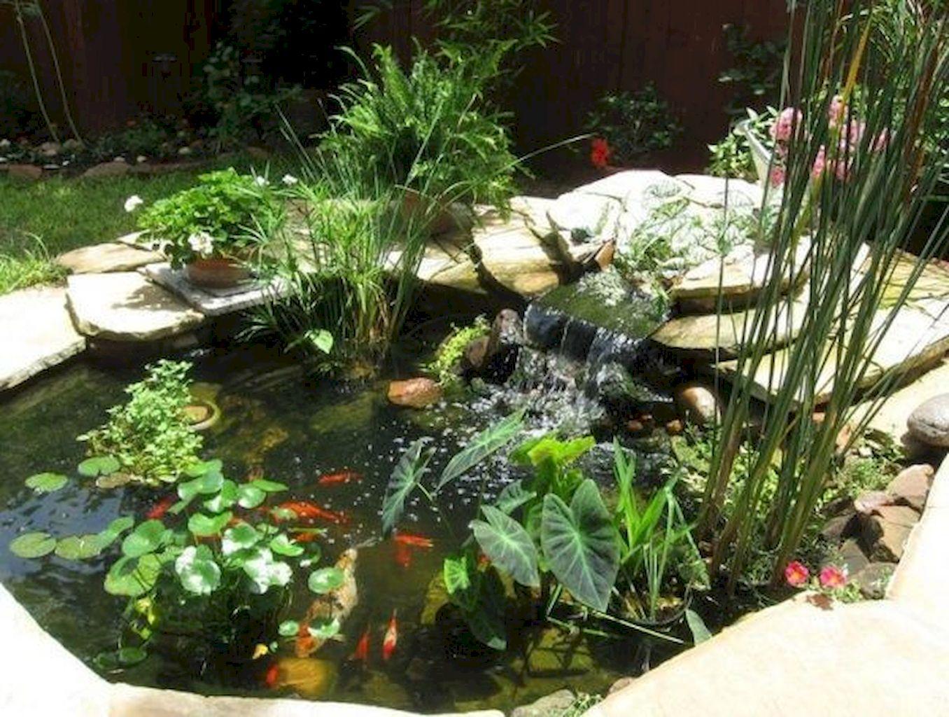 Backyard Pond015