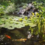 Enjoy the Peace and Serenity with Backyard Pond Decor 27