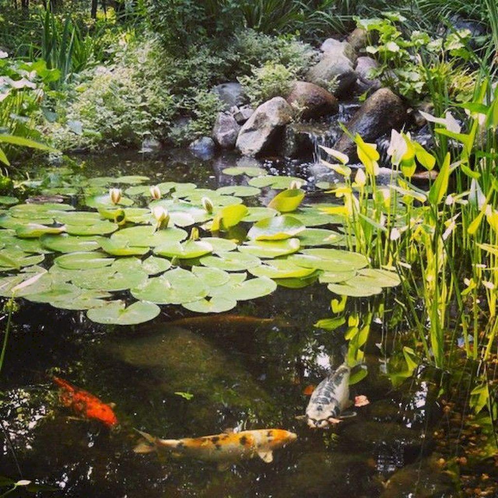 Backyard Pond027