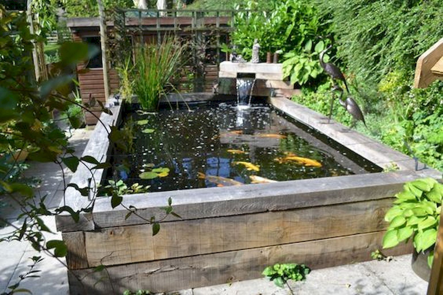 Backyard Pond087