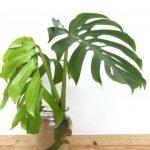 Apartment Indoor Gardening With Tropic Indoor Plants 136