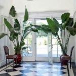 Apartment Indoor Gardening With Tropic Indoor Plants 137