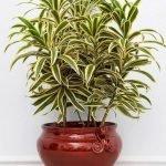 Apartment Indoor Gardening With Tropic Indoor Plants 139