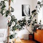 Apartment Indoor Gardening With Tropic Indoor Plants 144