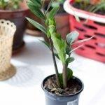 Apartment Indoor Gardening With Tropic Indoor Plants 3
