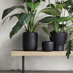 Apartment Indoor Gardening With Tropic Indoor Plants 5