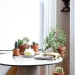 Apartment Indoor Gardening With Tropic Indoor Plants 6