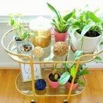 Apartment Indoor Gardening With Tropic Indoor Plants 7