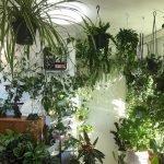 Apartment Indoor Gardening With Tropic Indoor Plants 8