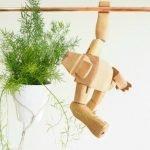 Apartment Indoor Gardening With Tropic Indoor Plants 9