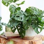 Apartment Indoor Gardening With Tropic Indoor Plants 10