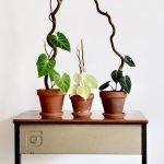 Apartment Indoor Gardening With Tropic Indoor Plants 11