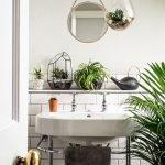 Apartment Indoor Gardening With Tropic Indoor Plants 12