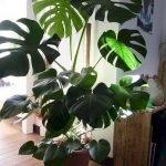 Apartment Indoor Gardening With Tropic Indoor Plants 13