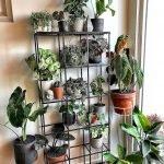 Apartment Indoor Gardening With Tropic Indoor Plants 14