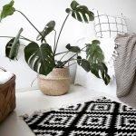 Apartment Indoor Gardening With Tropic Indoor Plants 18