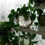 Apartment Indoor Gardening With Tropic Indoor Plants 19