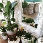 Apartment Indoor Gardening With Tropic Indoor Plants 20