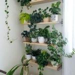 Apartment Indoor Gardening With Tropic Indoor Plants 24