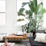 Apartment Indoor Gardening With Tropic Indoor Plants 25