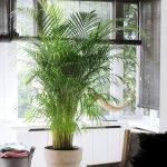 Apartment Indoor Gardening With Tropic Indoor Plants 26