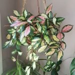 Apartment Indoor Gardening With Tropic Indoor Plants 27