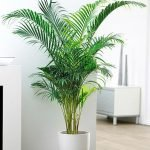 Apartment Indoor Gardening With Tropic Indoor Plants 30