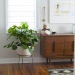Apartment Indoor Gardening With Tropic Indoor Plants 32