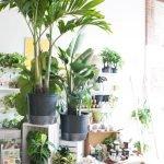 Apartment Indoor Gardening With Tropic Indoor Plants 35