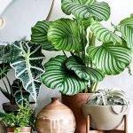 Apartment Indoor Gardening With Tropic Indoor Plants 37