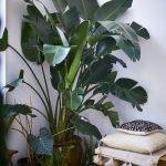 Apartment Indoor Gardening With Tropic Indoor Plants 38