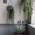 Apartment Indoor Gardening With Tropic Indoor Plants 40