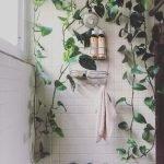Apartment Indoor Gardening With Tropic Indoor Plants 41