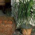 Apartment Indoor Gardening With Tropic Indoor Plants 42