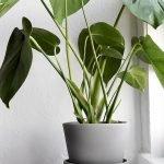 Apartment Indoor Gardening With Tropic Indoor Plants 44
