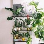 Apartment Indoor Gardening With Tropic Indoor Plants 45