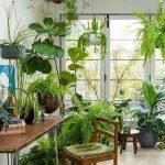 Apartment Indoor Gardening With Tropic Indoor Plants 47