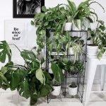 Apartment Indoor Gardening With Tropic Indoor Plants 50