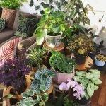 Apartment Indoor Gardening With Tropic Indoor Plants 51