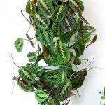 Apartment Indoor Gardening With Tropic Indoor Plants 52
