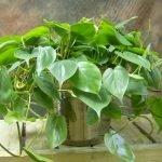Apartment Indoor Gardening With Tropic Indoor Plants 53