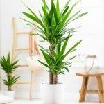 Apartment Indoor Gardening With Tropic Indoor Plants 54