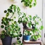 Apartment Indoor Gardening With Tropic Indoor Plants 58