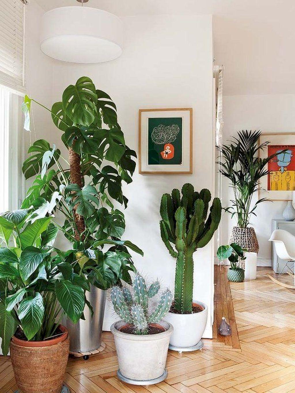 Apartment Indoor Gardening With Tropic Indoor Plants